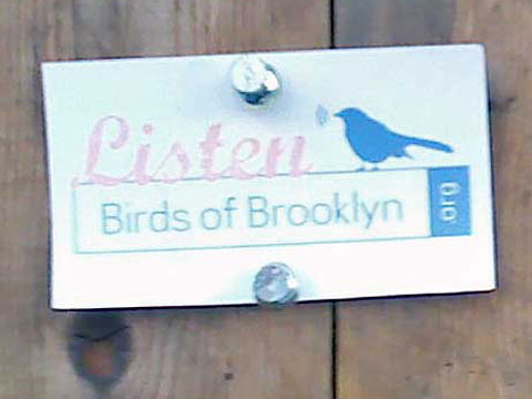 Birds of Brooklyn, Brooklyn Heights, foto Boris Klepal