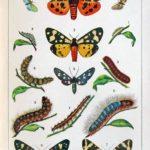 Butterfly, Lulu, Káťa. Motýlové a roztrhaná krása